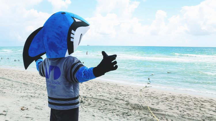 MDC shark mascot at the beach