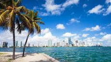 Miami skyline view with bay and palm trees